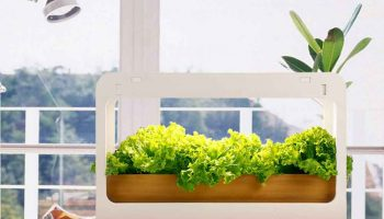 11 Best Indoor Herb Garden Kits In 2021