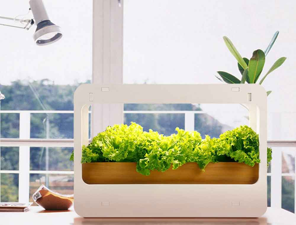 Best Indoor Herb Garden Kits