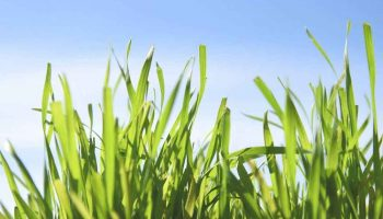 Top 15 Best Grass Seeds In 2020