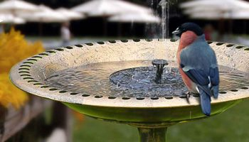 Top 11 Best Heated Bird Baths For Your Backyard